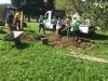 Saditev drevesa